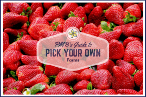 pick your own strawberries Providence Moms Blog