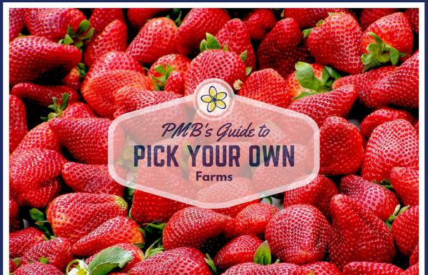 pick your own strawberries Providence Moms Blog
