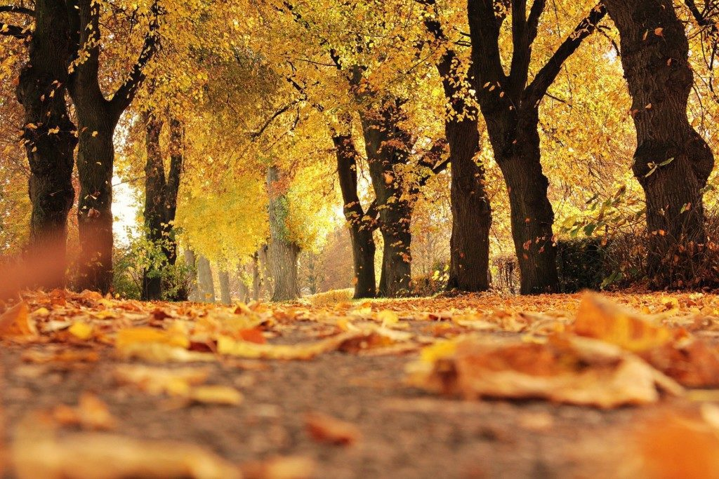 pros cons autumn Providence Moms Blog