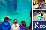 Roger Williams Park Zoo Black Friday Providence Moms Blog