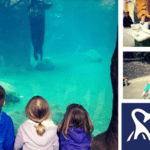 Roger Williams Park Zoo Black Friday Deal   Visit for Free