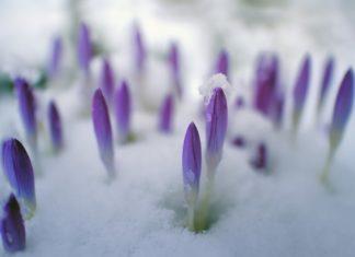 spring Providence Moms Blog