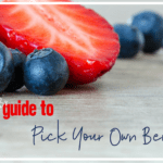 Pick Your Own Berry Farms in Rhode Island and Massachusetts