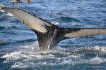 whale tail Providence Moms Blog