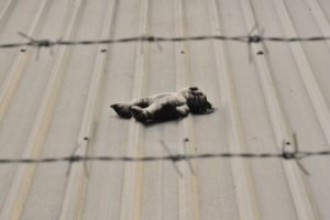 teddy bear against barbed wire Providence Moms Blog