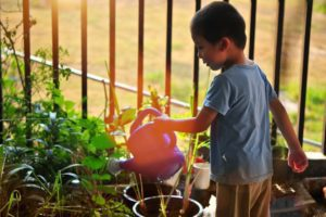 young boy watering plants Providence Moms Blog