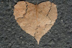 broken leaf Providence Moms Blog