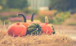 Provide ce Pumpkin Patches Pumpkin Picking