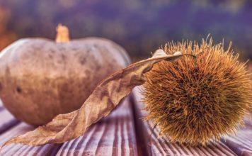 fall decor; pumpkin and chestnut