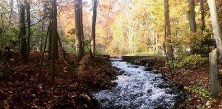 river winding through the woods | adventure base camp | providence mom