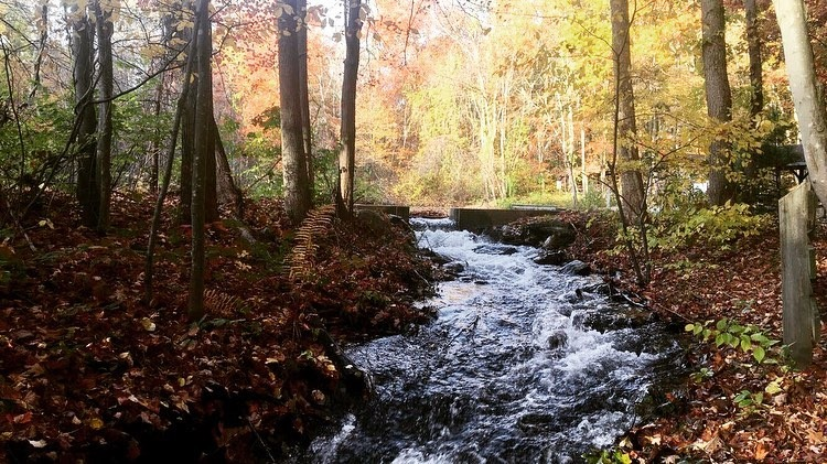 river winding through woods | Adventure Base Camp | Providence Mom