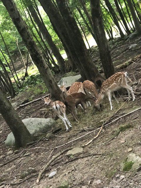 deer at Southwick Zoo Zoofari