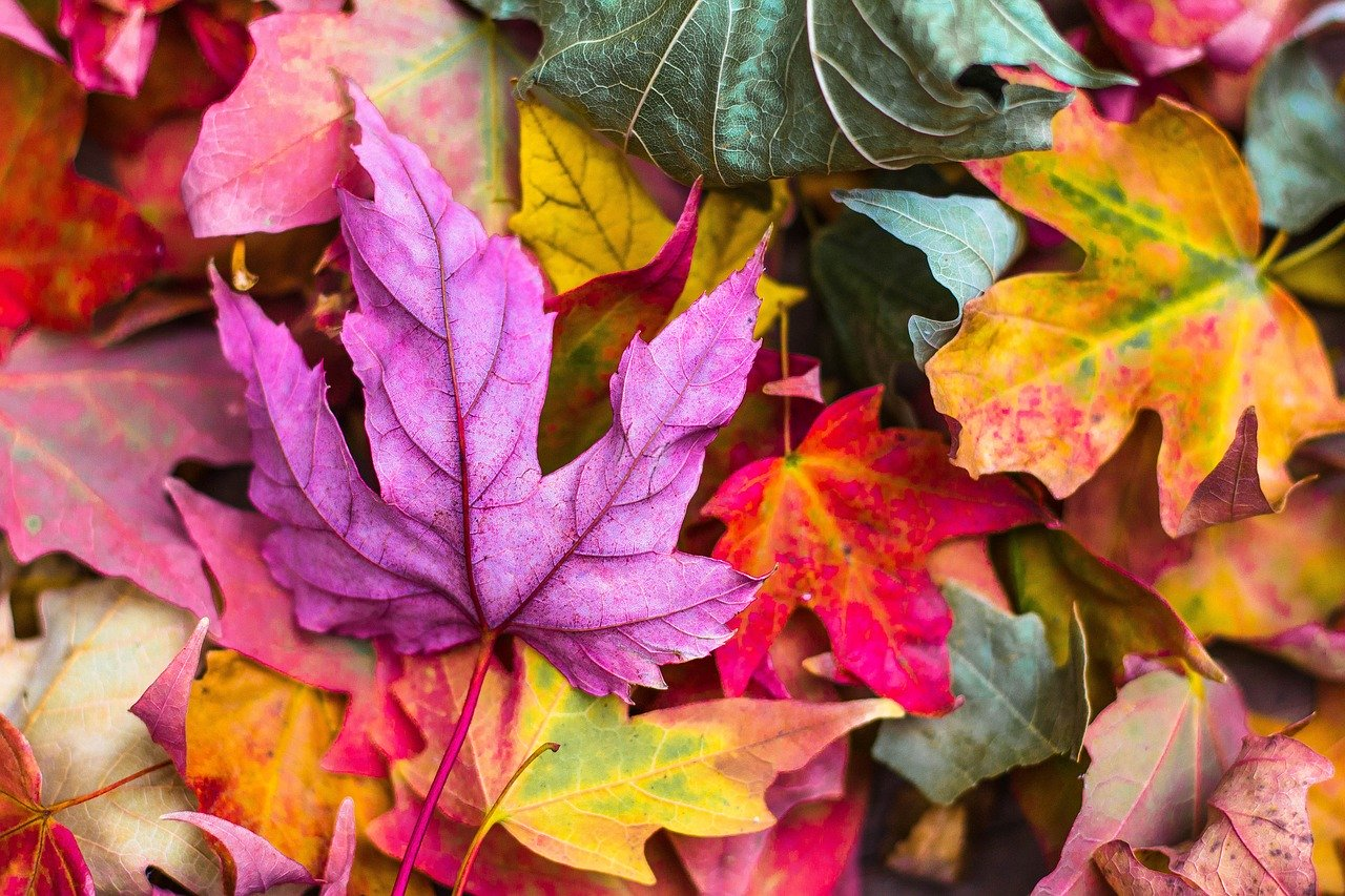 Fall crafts using colorful leaves