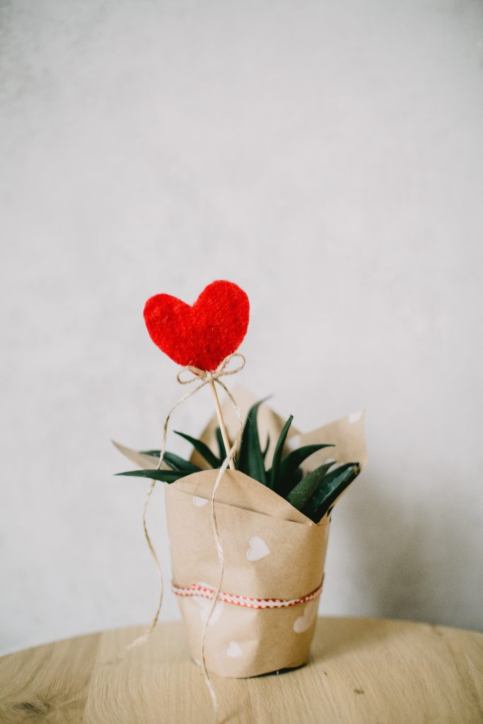 celebrating Valentine's Day plant with heart