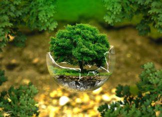 raising earth conscious kids